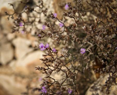 brac: Image of flowers and stones, Bol, Brac, Croatia Stock Photo