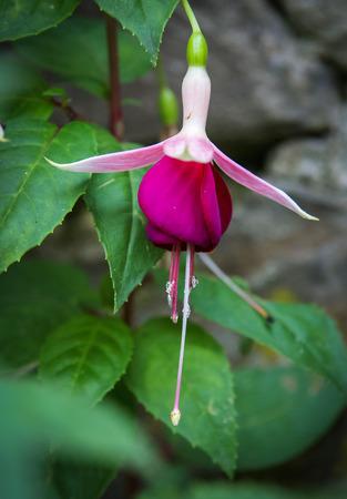 cantabria: Image of summer flowers, Barcena Maior, Asturia y Cantabria, Spain