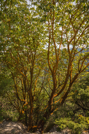 olympus: Image of spring trees on Mount Olympus, Central Greece Stock Photo