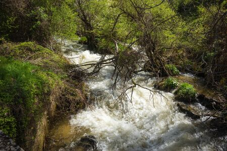 torrent: Image of torrent of rapids near Lake Prespa, Greece
