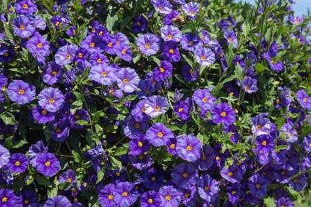 sporades: Beautiful spring flowers at Skiatos island, Greece