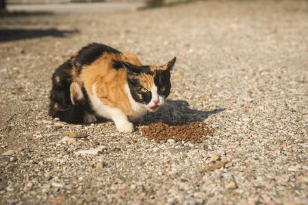 sporades: Image of Scirian animals, Scirian island, Greece