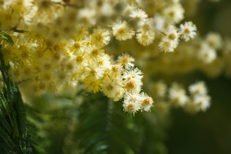 paisaje mediterraneo: Imagen de las flores de la primavera, Madrid, España