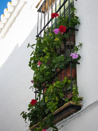 carmona: Cityscape at Carmona, Andalusia, Spain