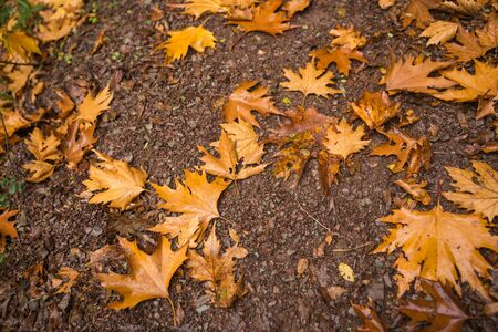 evritania: Golden autumn leaves at Evritania