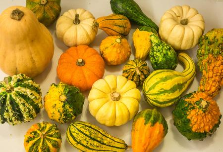 colorful still life: Still life with colorful decorative mini pumpkins Stock Photo