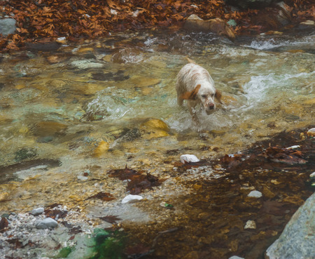 Dog in a river with colored stones and hot springs in Loutra Pozar in Northern Greece