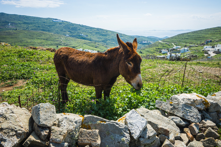 house donkey: Image of donkey near pigeon house on  island of Tinos in Greece Stock Photo