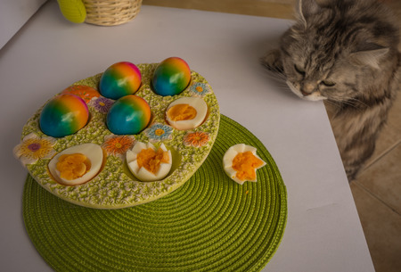 Image of a cat looking at colorful painted Easter eggs, Athens, Greece Stock Photo