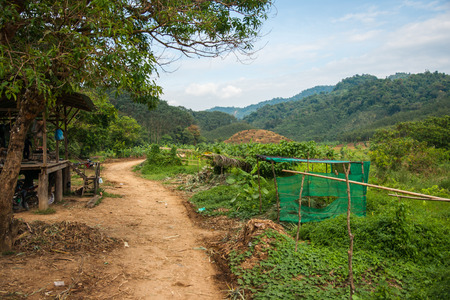 Landscape view of tropical rain forest of Khao Sok sanctuary, Thailand Stock Photo