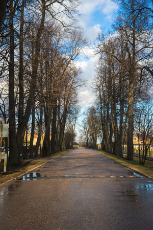 Perspective view of  an alley with aspen trees after rain near Moscow, Russia Stock Photo