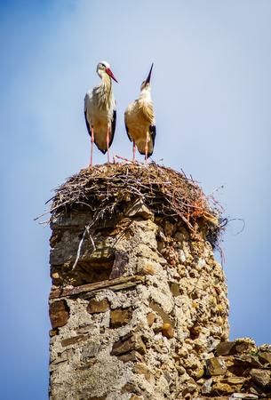 Storks on ruins of castle in Laguna de Negrillos, Castilla y Leon, Spain