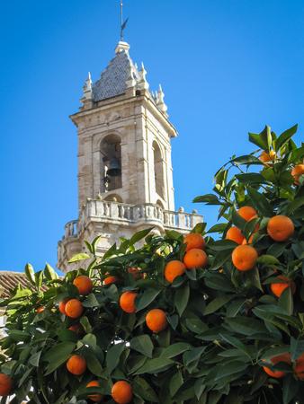 Cathedral and  oranges in Jerez de la Frontera in Spain