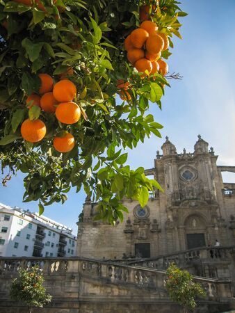 belfry: Cathedral and  oranges in Jerez de la Frontera in Spain