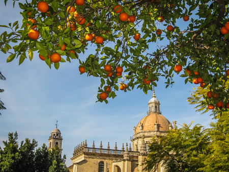 Cathedral and  oranges in Jerez de la Frontera in Spain