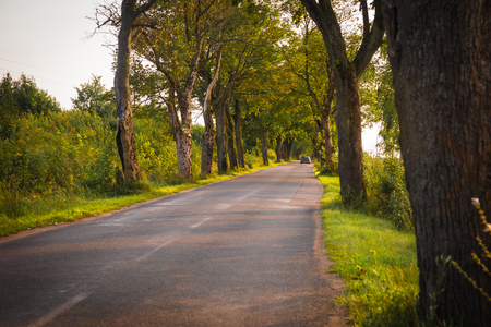 Image of old trees along road (last soldiers of Wehrmacht)