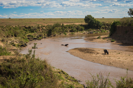 Image of hippos on the Mara River in Kenya