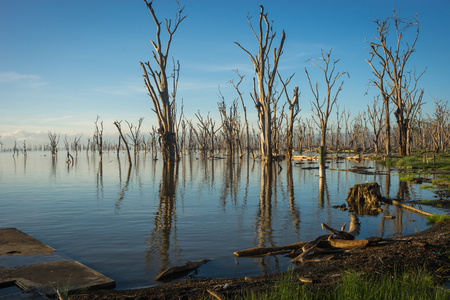 Image of dead trees in flooded Lake Nakuru with reflections in Kenia Stock Photo