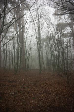 Landscape in clouds  and mist on Mount Ai Petri in  Crimea in Russia Stock Photo - 93814301
