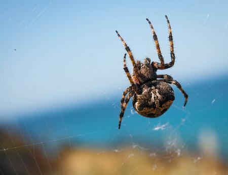 Image of big spider on its web against blue sky 版權商用圖片