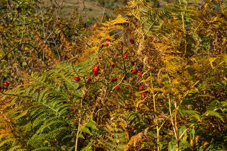Image of early autumn bush in the mountains of Abruzzo, Italy Stock fotó