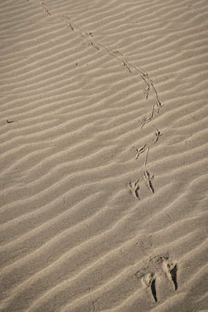 Image of bird footprints on purest white sand on deserted beach of Bufalara in Italian province of Latina
