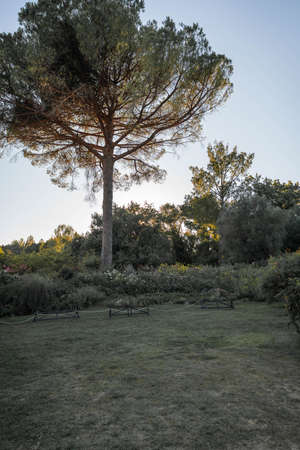 Image of trees and branches backlit at sunset in province of Latina in Italy Imagens