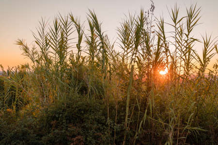 Image of tall grass against backdrop of sun at sunset in province of Latina in Italy