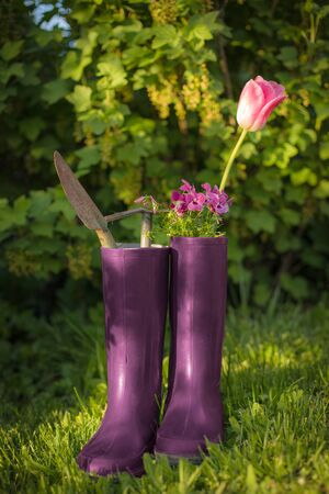 gardening with tools in rubber boots and green bush background Standard-Bild