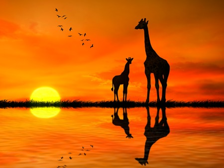 Silhouettes of two giraffes with reflection in lake water against African sunset  photo