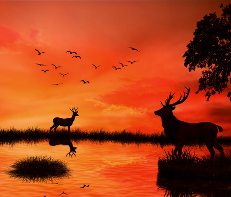 dream lake: Silhouettes of two deers with stag horns with reflection in lake water against orange sunset dusk sky skyline background with flying birds. Wild life landscape scene screen saver