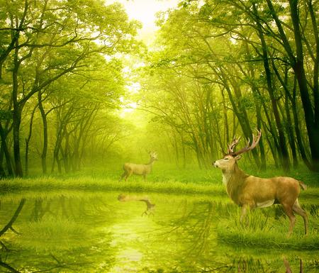 venado cola blanca: Dólares de los ciervos en el verano de terciopelo de pie en una abertura en el bosque. Dos ciervos con cuernos de ciervo en el bosque con lago en el fondo con árboles verdes de la mañana la luz del día. Paisaje salvaje vida salvapantallas escena Foto de archivo