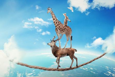 La gestión de los negocios de riesgo concepto desafía incertidumbre. Ciervos con jirafa, el gato camina en la cuerda peligroso alta en el cielo símbolo equilibrio superar el miedo para el éxito meta. Joven empresario mundo corporativo