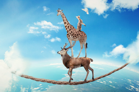 powerful creativity: Managing risk business challenges uncertainty concept. Deer with giraffe, cat walking on dangerous rope high in sky symbol balance overcoming fear for goal success. Young entrepreneur corporate world