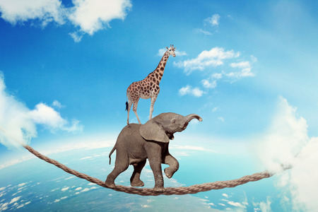 powerful creativity: Managing risk business challenges uncertainty concept. Elephant with giraffe walking on dangerous rope high in sky symbol balance overcoming fear for goal success. Young entrepreneur corporate world Stock Photo