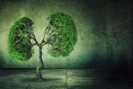 Conceptual image of green tree shaped like human lungs growing from concrete floor isolated on a background of grey wall. Urbanization concept