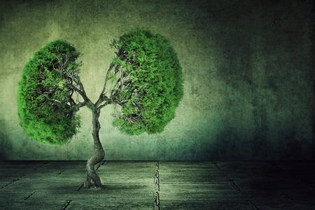 Conceptueel beeld van groene boom in de vorm van menselijke longen groeit van betonnen vloer geïsoleerd op een achtergrond van grijze muur. Verstedelijking begrip Stockfoto