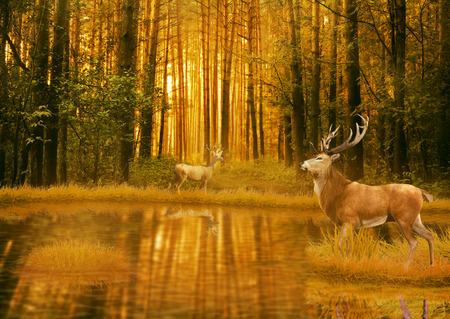 Herten Bucks in de zomer zonsondergang licht staande in een opening in het bos. Twee herten met hert hoorns in bos met meer op de achtergrond met bomen. Wild life landschap scène screen saver Stockfoto