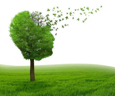 Choroba mózgu z utratą pamięci z powodu choroby Alzheimera, demencji i medycznych jako ikony w kształcie drzewa ludzkiej głowy i mózgu utraty liści jako koncepcji wywiadu spadku.