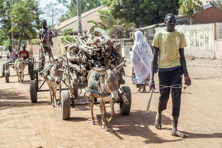 donkey: Gabu, Guinea-Bissau - April 6, 2014: african young men carrying firewood in donkey carriages
