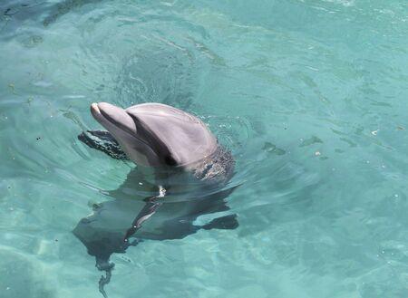 dolphin Stock Photo - 6769596