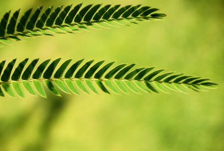two green leaves Stock Photo