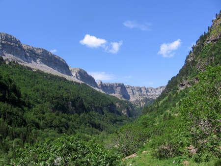 prachtige groene bossen vallei
