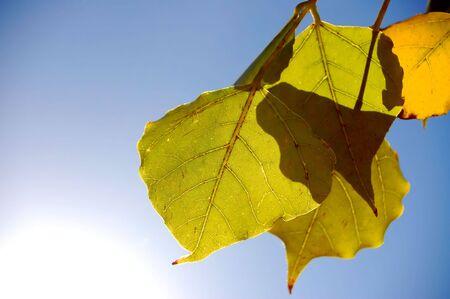 leaves over blue sky