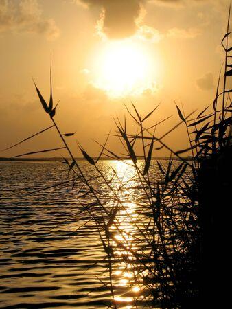 weeds shadow at sea