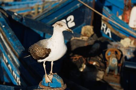 close up of a sea gull with fishing boats in the background in Africa Banco de Imagens