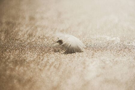 A white feather on the wet sand of Atlantic Ocean, beautiful feathers lines, sandy background