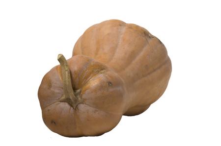 pumpkin oblong isolated on white, fresh, harvest, halloween symbol. Standard-Bild - 118476520
