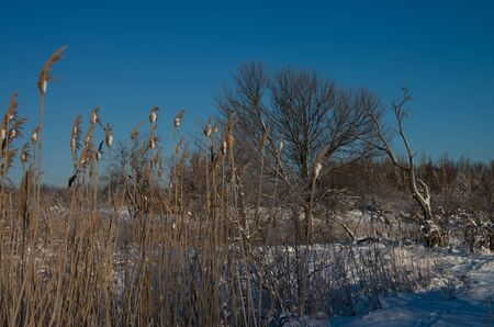 Winter, morning, dawn, trees, branch, snow sunny light close-up blue sky forest Stock Photo