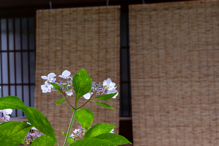 Hydrangea and awnings Imagens